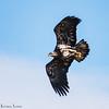 black eagle 5097 fb