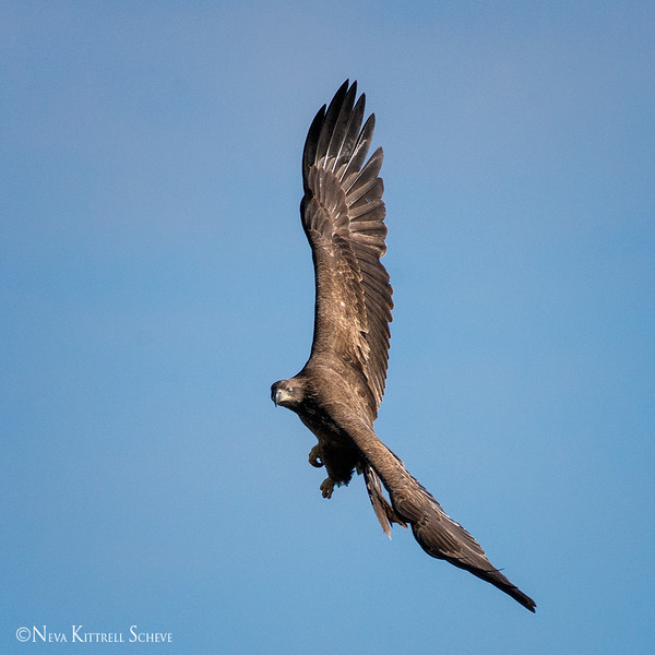 eagle flight_5660 fb