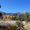 Aspen trees, Stevens Peak.