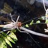 Katydid from the bottom.
