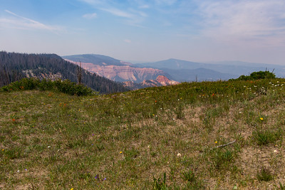 Cedar Breaks Wildflower Festival