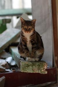 Joist Cat