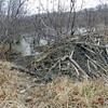 This beaver lodge is functional but it doesn't have much curb appeal.