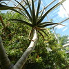 Temperate House... my favorite plant