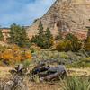 East Zion National Park