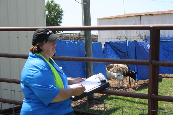 Day Two AKC Farm Dog certification Test - Kim Sykes Judge