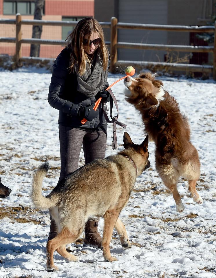 Valmont Dog Park