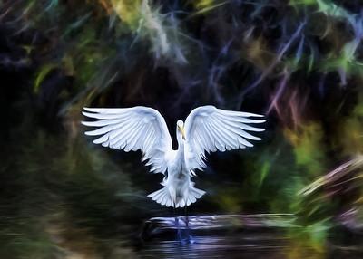 Magical Egret of Riefel Bird Sanctuary