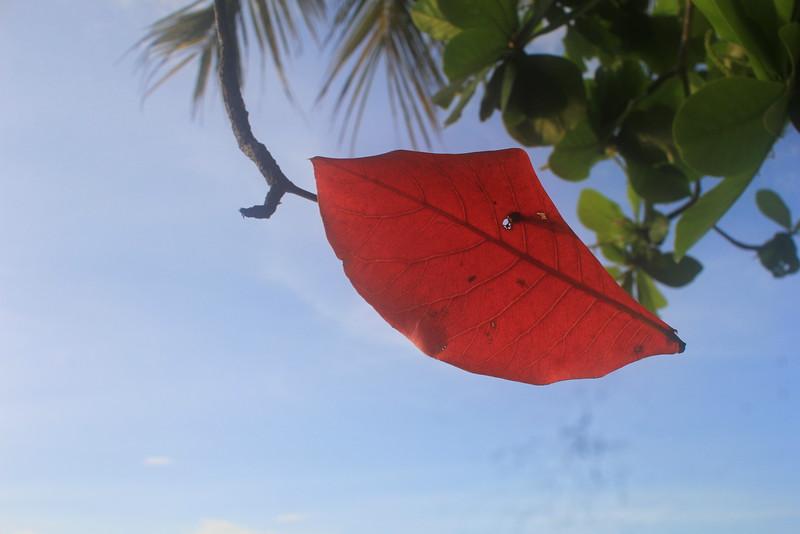 """Leaf""""n leaves"""