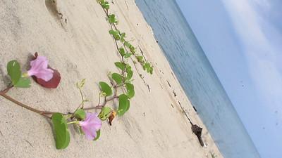 Singing Beach Mantra