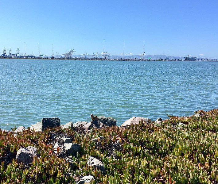September 9, 2019: Emeryville Marina