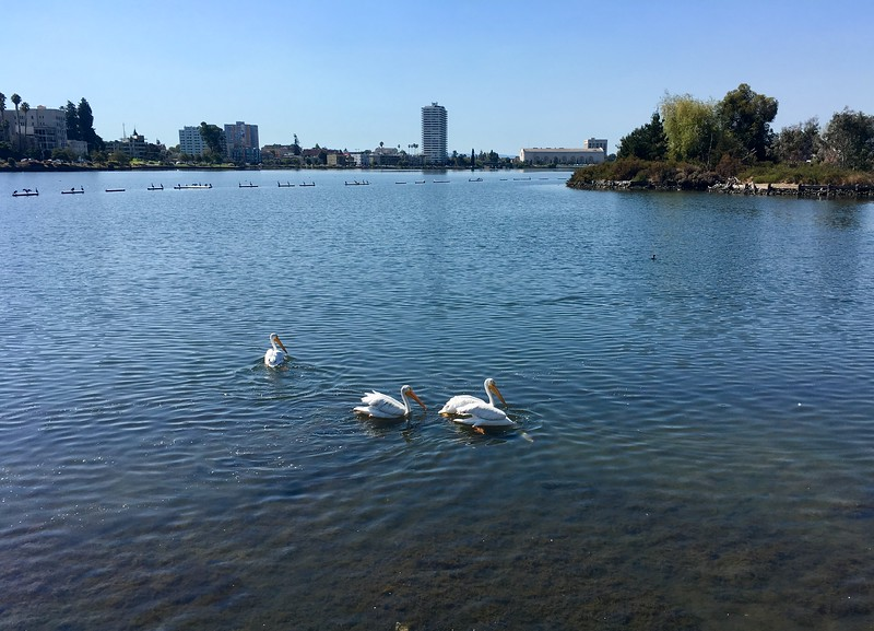 September 12, 2019: Lake Merrit