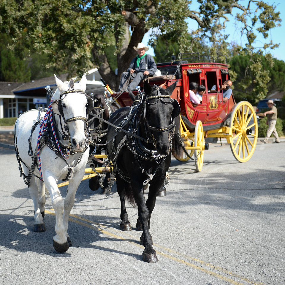 2015 Day of the Horse-28