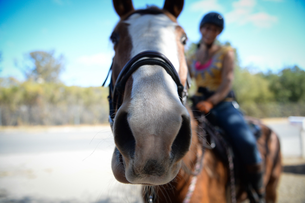 2015 Day of the Horse-35