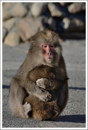 Another Mom.  I love how she is even hugging him with her feet.
