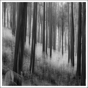 Intentional camera motion of the forest floor.