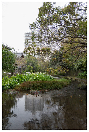 Another view of the stream, this time with cali lilies.