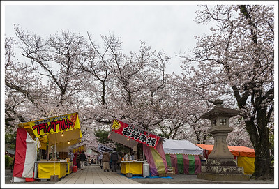 Cherry blossom festival was in full swing along with the obligatory food stalls.