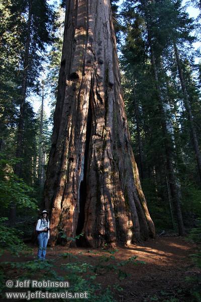 Lynda by a Giant Sequoia (7/16/2011, South Grove Hike, Calaveras Big Trees SP)
