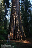 Lynda photographing a Giant Sequoia (7/16/2011, South Grove Hike, Calaveras Big Trees SP)