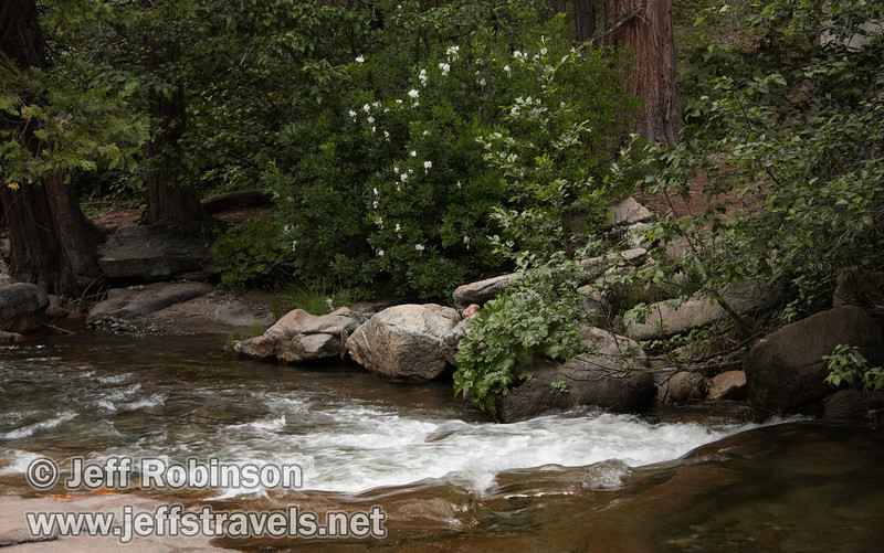 White water in Beaver Creek, with white flowering bushes on the far side (probably Western Azalea). Seen under the bridge for the South Grove trail. (7/16/2011, South Grove Hike, Calaveras Big Trees SP)