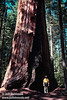 Jeff by the base of a large sequoia (July 2002, South Grove, Calaveras Big Trees SP)