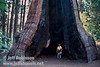 Jeff standing in the burned-out center of a giant sequoia, probably the Palace Hotel tree (July 2002, South Grove, Calaveras Big Trees SP)