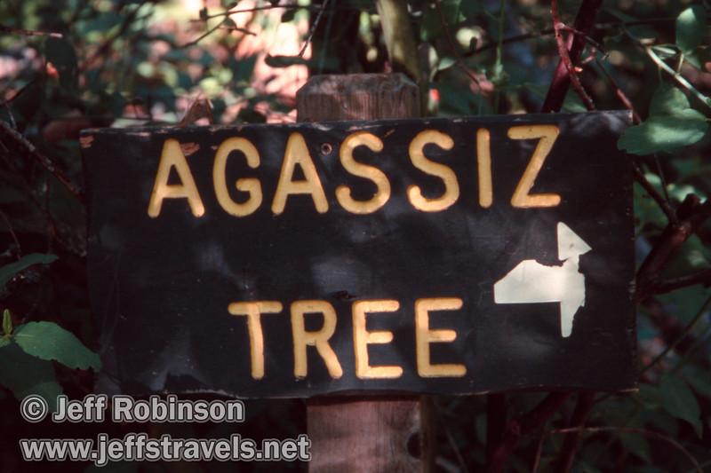 Agassiz Tree sign (July 2002, South Grove, Calaveras Big Trees SP)