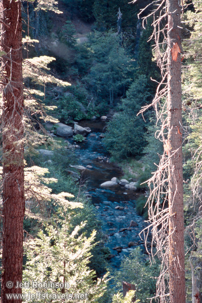 Shaded creek framed by sunlit trees (July 2002, South Grove, Calaveras Big Trees SP)