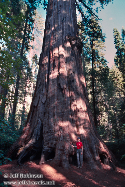 Lynda standing by the base of a giant sequoia. This is probably the Agassiz Tree, the largest sequoia in the park (July 2002, South Grove, Calaveras Big Trees SP)(July 2002, South Grove, Calaveras Big Trees SP)