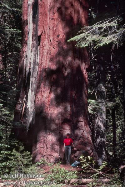 Lynda by the base of a large sequoia (July 2002, South Grove, Calaveras Big Trees SP)