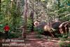 Lynda standing near a fallen sequoia (July 2002, South Grove, Calaveras Big Trees SP)