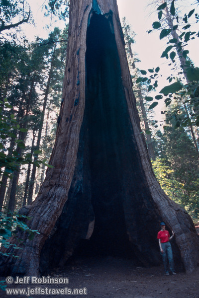 Lynda standing in the burned-out center of a giant sequoia, probably the Palace Hotel tree (July 2002, South Grove, Calaveras Big Trees SP)