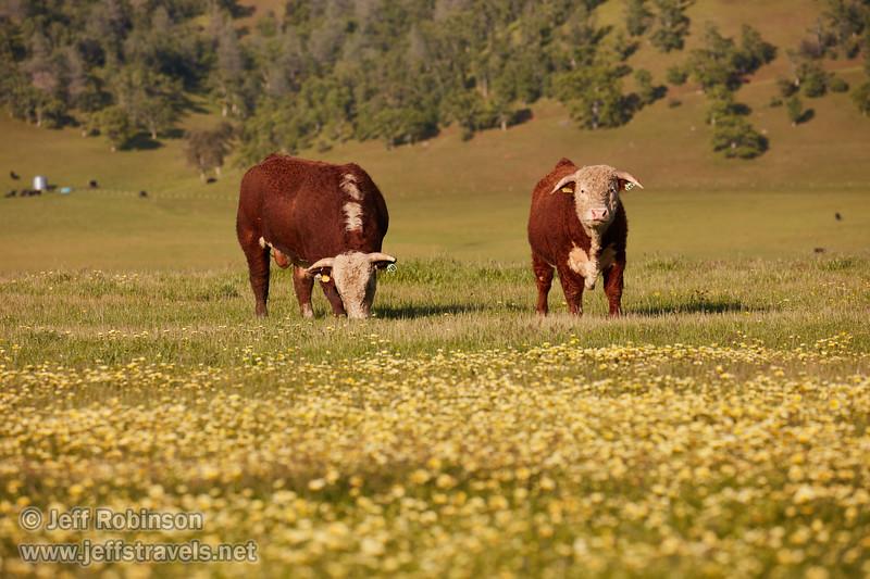 (4/9/2017, Bear Valley)<br /> EF100-400mm f/4.5-5.6L IS II USM @ 278mm f8 1/800s ISO400