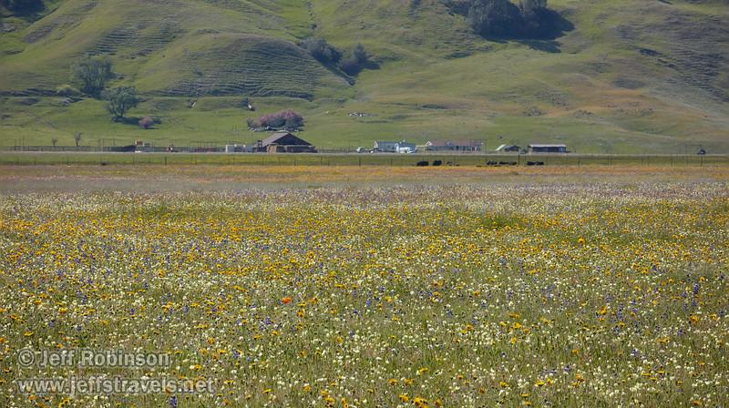 (4/14/2018, Bear Valley)<br /> EF100-400mm f/4.5-5.6L IS II USM @ 312mm f8 1/1000s ISO400