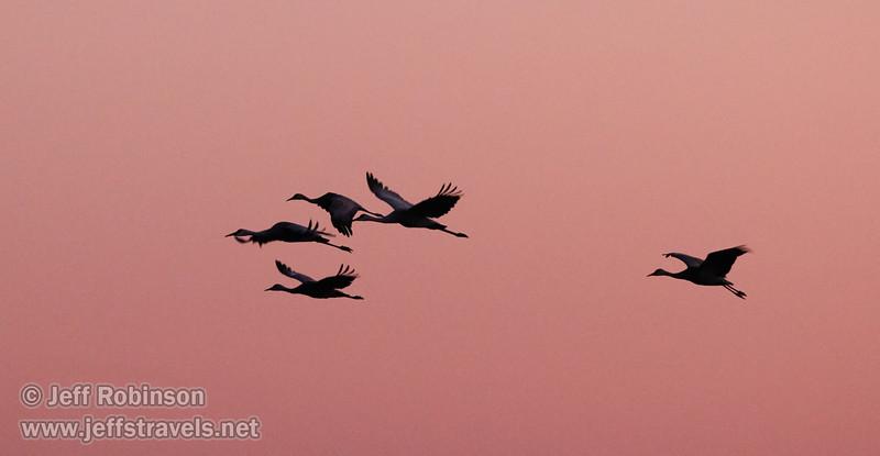 Sandhill Cranes in flight against subtle sunset colors (10/12/2016, Woodbridge Ecological Reserve, South Unit)<br /> 150-600mm F5-6.3 DG OS HSM | Sports 014 @ 270mm f6.3 1/200s ISO6400