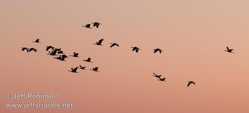 Sandhill Cranes in flight against subtle sunset colors  (10/12/2016, Woodbridge Ecological Reserve, South Unit)<br /> 150-600mm F5-6.3 DG OS HSM   Sports 014 @ 150mm f6.3 1/200s ISO3200