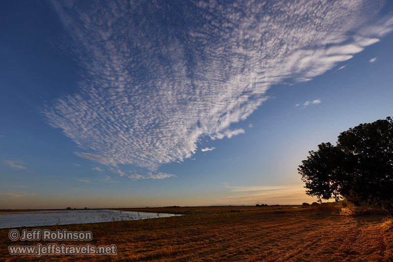 Textured clouds over a flooded field and tree (10/12/2016, Woodbridge Ecological Reserve, South Unit)<br /> EF11-24mm f/4L USM @ 12mm f8 1/250s ISO100