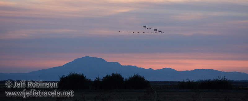 A flock of geese (probably White-fronted Geese) flying in front of clouds at sunset, with Mt. Diablo in the distance (10/12/2016, Woodbridge Ecological Reserve, South Unit)<br /> EF100-400mm f/4.5-5.6L IS II USM @ 188mm f5.6 1/640s ISO1000