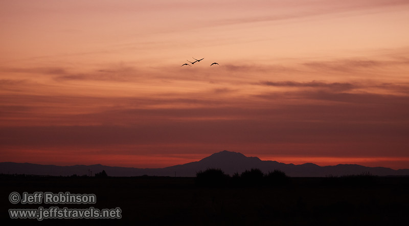 Sandhill Cranes in flight against sunset clouds, with Mt. Diablo in the background (10/12/2016, Woodbridge Ecological Reserve, South Unit)<br /> EF100-400mm f/4.5-5.6L IS II USM @ 124mm f4.5 1/400s ISO3200