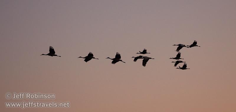 Sandhill Cranes in flight against subtle sunset colors  (10/12/2016, Woodbridge Ecological Reserve, South Unit)<br /> EF100-400mm f/4.5-5.6L IS II USM @ 170mm f5 1/500s ISO3200