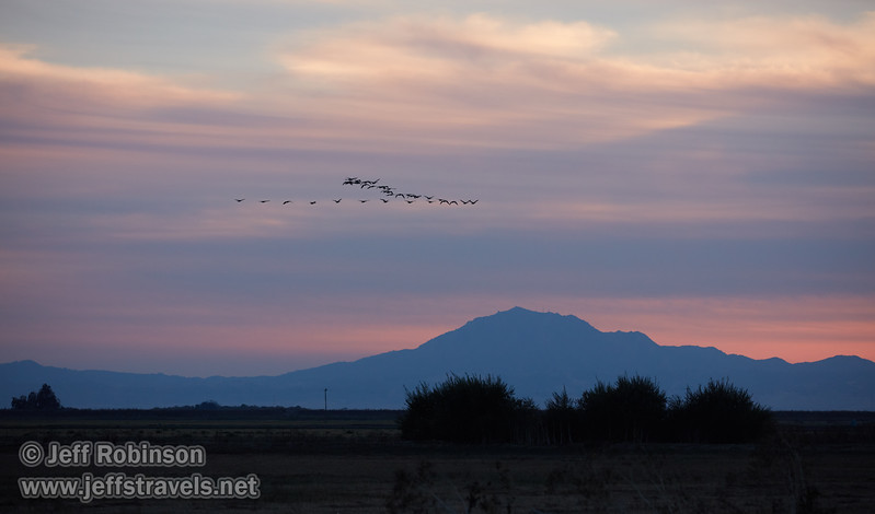 A flock of geese (probably White-fronted Geese) flying in front of clouds at sunset, with Mt. Diablo in the distance (10/12/2016, Woodbridge Ecological Reserve, South Unit)<br /> EF100-400mm f/4.5-5.6L IS II USM @ 220mm f5.6 1/640s ISO1000