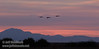 Sandhill Cranes flying against sunset clouds, with Mt. Diablo in the background (10/12/2016, Woodbridge Ecological Reserve, South Unit)<br /> 150-600mm F5-6.3 DG OS HSM | Sports 014 @ 175mm f6.3 1/320s ISO1600