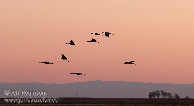 Sandhill Cranes in flight against subtle sunset colors  (10/12/2016, Woodbridge Ecological Reserve, South Unit)<br /> 150-600mm F5-6.3 DG OS HSM | Sports 014 @ 170mm f6.3 1/160s ISO3200