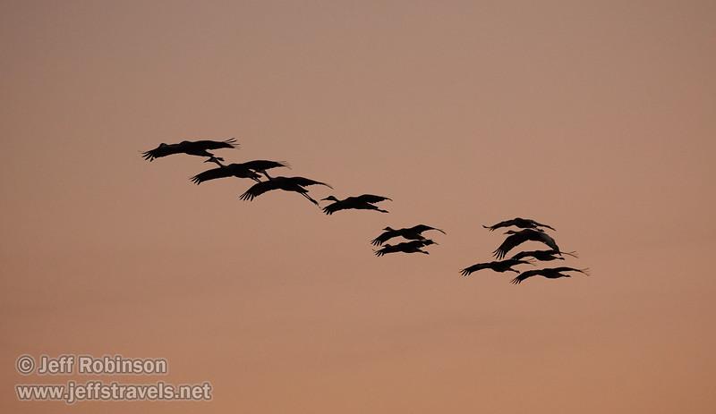 Sandhill Cranes in flight against subtle sunset colors  (10/12/2016, Woodbridge Ecological Reserve, South Unit)<br /> EF100-400mm f/4.5-5.6L IS II USM @ 271mm f5 1/800s ISO3200