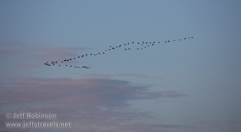A flock of geese flying by late-day clouds (probably White-fronted geese) (10/12/2016, Woodbridge Ecological Reserve, South Unit)<br /> EF100-400mm f/4.5-5.6L IS II USM @ 400mm f8 1/500s ISO400