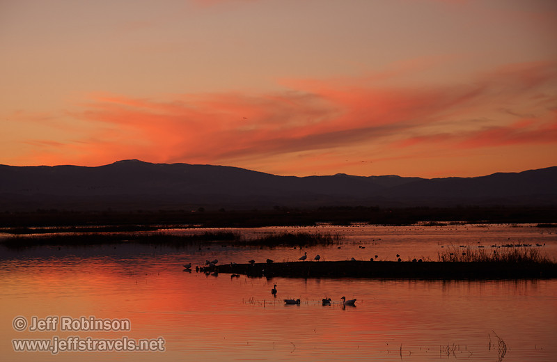 Pink-Orange colors of sunset with the silhouettes of birds in the water. (1/19/2013, Sacramento National Wildlife Refuge)