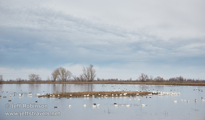 Geese, ducks, and coots under textured clouds  (1/10/2015, Sacramento National Wildlife Refuge)<br /> EF24-105mm f/4L IS USM @ 58mm f5.6 1/200s ISO500