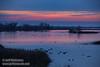 (1/10/2015, Sacramento National Wildlife Refuge)<br /> EF70-200mm f/2.8L IS II USM @ 155mm f5.6 1/30s ISO400