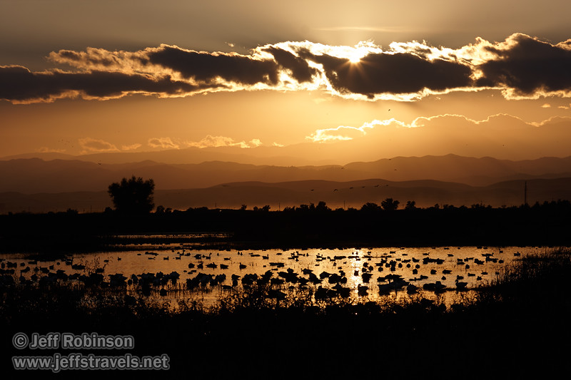 Silhouetted geese and ducks in the water, with the sun behind a row of clouds. (11/10/2012, Sacramento National Wildlife Refuge)